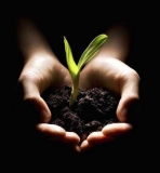hands_holding_a_seedling_18217503